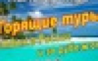 Отзыв о Туристическая компания Какаду