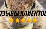 Отзыв о Камчатинтур, путешествия по Камчатке