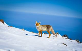 Elbrus.guide отзывы