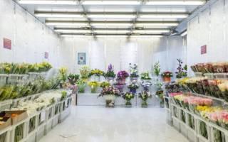 Мосцветторг цветочная база отзывы